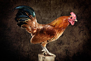 Alarm Clock Posters - Red Rooster on Fence Post Poster by Cindy Singleton