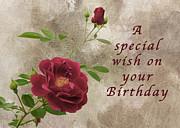 Michael Peychich - Red Rose Birthday Wish