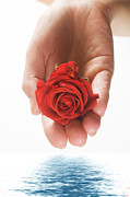 Rose Water Art - Red rose in palm and water by Michal Bednarek