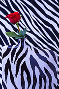 Graphic Art - Red Rose In Zebra Vase by Garry Gay