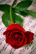 Ed Posters - Red Rose On Sheet Music Poster by Garry Gay