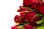 Deep Red Flowers Posters - Red Roses Poster by Anne Gilbert
