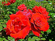 Winery Photography Digital Art Prints - Red Roses on Mission Hill in Kelowna-BC Print by Ruth Hager