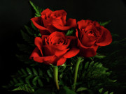 Indiana Flowers Prints - Red Roses Print by Sandy Keeton