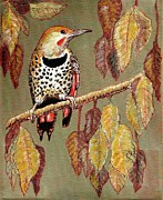 VLee Watson - Red Shafted Flicker