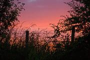Liz  Alderdice - Red Sky at Night