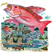 Trigger Fish Prints - Red Snapper Print by Carey Chen
