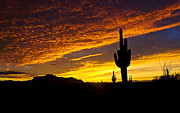 Saija  Lehtonen - Red Sonoran Skies