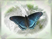 Mother Nature Photos - Red-Spotted Purple Butterfly - Limenitis arthemis by Mother Nature