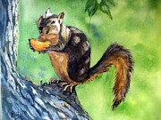 Squirrel Painting Prints - Red squirrel and orange  Print by Patricia Pushaw