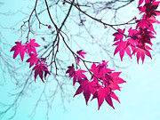 Red Maple Prints - Red Star Clusters Print by Irina Wardas