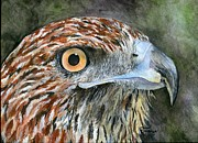 Red Tail Hawk Paintings - Red Tail Hawk by Brandy Fenenga