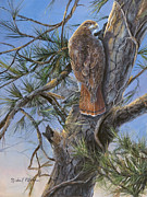 Birds Jewelry Prints - Red Tail Hawk Print by Michael Ashmen