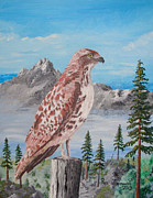 Ron Thompson - Red Tail Hawk