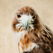 Bird Of Prey Posters - Red Tail Portrait Square Poster by Bill  Wakeley