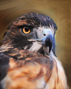 Night Hawk Prints - Red Tailed Hawk Portrait Print by Jai Johnson