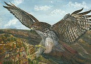 Red Tail Hawk Paintings - Red-Tailed Hawk by Tom Blodgett Jr