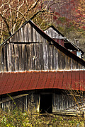 Tennessee Barn Posters - Red Tin Roof Poster by Debra and Dave Vanderlaan
