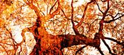 Juan Jose Espinoza - Red Tree