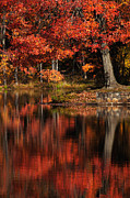 """autumn Reflection"" Photos - Red Tree by Karol  Livote"