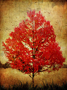 Margaret Hormann Bfa Posters - Red Tree Poster by Margaret Hormann Bfa