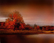 Robert Foster - Red Tree River
