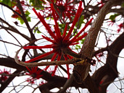 Youtube Prints - Red Tree Spiders  Print by Kenneth James