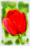 Green Day Digital Art - Red tulip Aquarell by Matthias Hauser