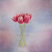 Red Tulips Prints - Red Tulip Still Life Print by Kim Hojnacki