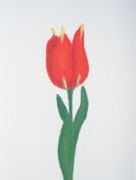 Natural Pastels - Red Tulip with Yellow Tips-White Background by C A Daniels