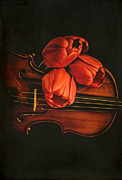 Music Lover Prints - Red tulips on a violin Print by Edward Fielding