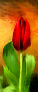Spring Series Prints - Red Tulips Triptych Section 1 Print by Lourry Legarde