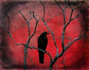 Corvidae Prints - Red Velvet Print by Gothicolors And Crows
