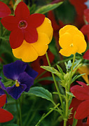Robert Lozen Metal Prints - Red Yellow Purple Flowers Metal Print by Robert Lozen