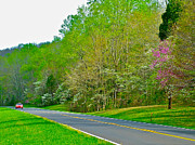 Natchez Trace Parkway Metal Prints - Redbud and Dogwood in Spring at Mile 363 of Natchez Trace Parkway-TN Metal Print by Ruth Hager
