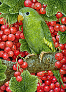 Cranberries Framed Prints - Redcurrant Parakeet Framed Print by Ditz