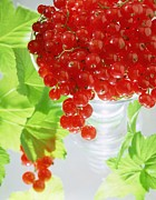 Fruit Still Life Posters - Redcurrants and leaves Poster by Norman Hollands
