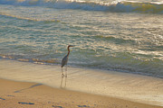 Note Art - Reddish Egret In Surf by Steven Ainsworth
