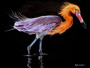 Waterfowl Paintings - Reddish Egret on Black by Phyllis Beiser