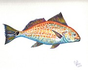 Chris Bajon Jones - Redfish