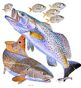 Permit Prints - Redfish Trout Print by Carey Chen