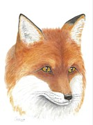Fox Pastels Prints - Redfox Print by Cristolin O
