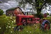 Debra and Dave Vanderlaan - Reds in the Pasture