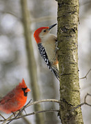 Bird On Tree Prints - Reds Print by Jocelyn Ball