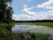 Bottomlands Photo Prints - Redtail Lake at Steigerwald Natinal Wildlife Refuge Print by Lizbeth Bostrom