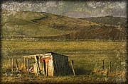 Liz  Alderdice - Redundant Shelter