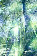 Redwood Dreams Print by Nicole Swanger