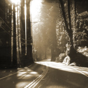 Haze Digital Art Prints - Redwood Drive Print by Mike McGlothlen