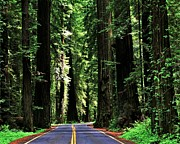 Scenic Drive Prints - Redwood Highway Print by Benjamin Yeager