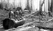 Daniel Hagerman - REDWOOD LOGGING CREW c....
